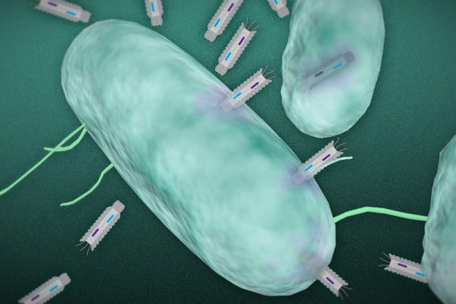 In this illustration, phagemid plasmids infect a targeted bacteria.