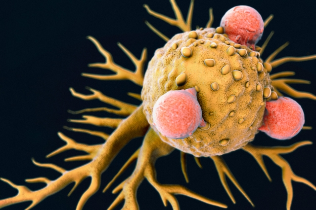 An illustration of T Lymphocytes on a Cancer Cell.