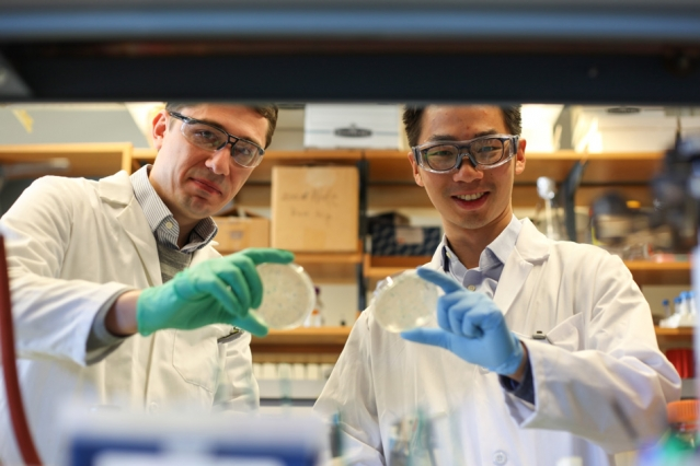 Biological engineering PhD student Shiou-chi (Steven) Chang (right) and research associate Bogdan Fedeles (left) are both members of the Essigmann Lab