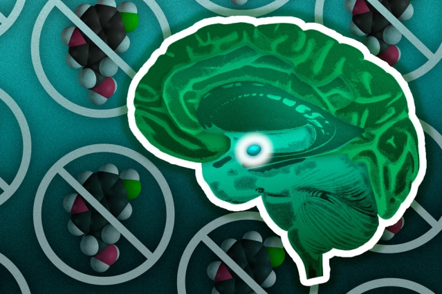 This illustration shows a brain with the amygdala highlighted in the center. In the background are models of the serotonin molecule.