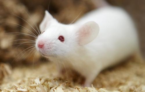 mice 5