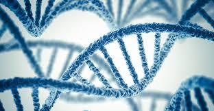 genetics 1