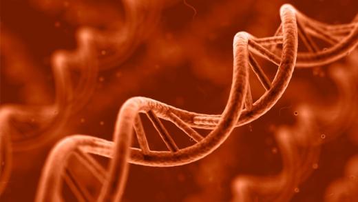 genetics 4