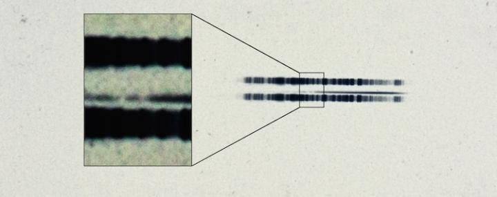 IMAGE  - 113026 web 1 - 1917 astronomical plate has first-ever evidence of exoplanetary system