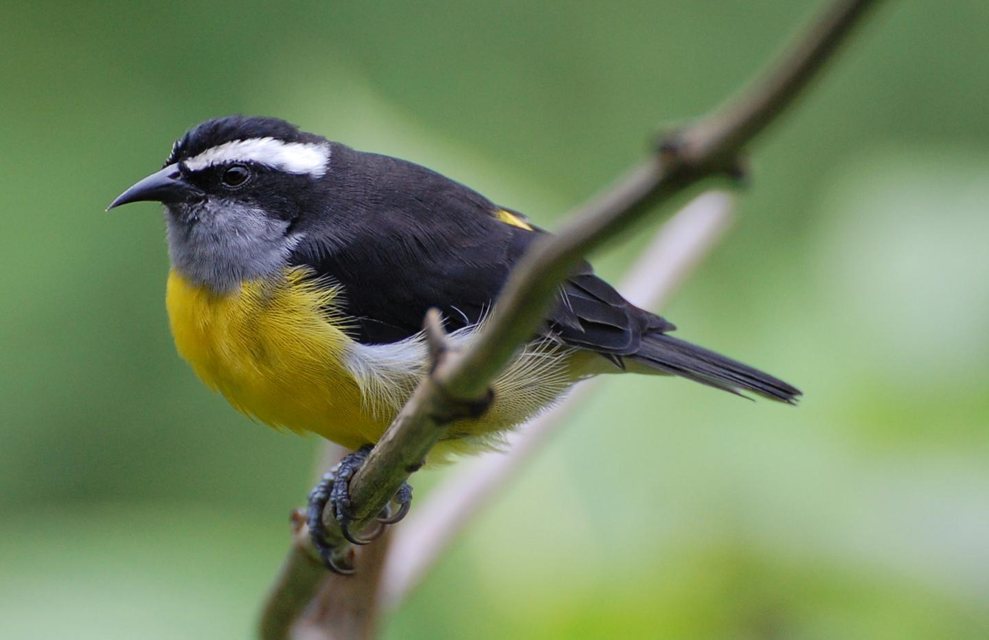 IMAGE  - 113065 web 1 - Research reveals trend in bird-shape evolution on islands