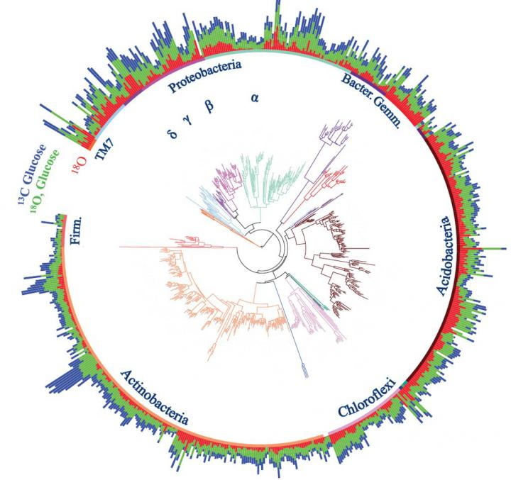 IMAGE  - 113447 web 1 - New tool reveals role of ancestry in soil communities of bacteria