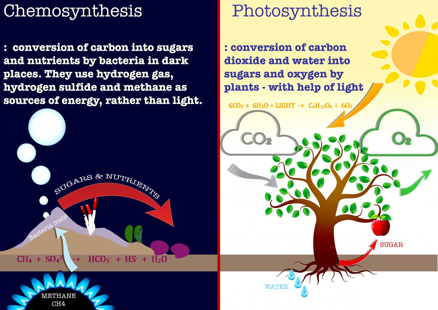 differences between chemosynthesis and