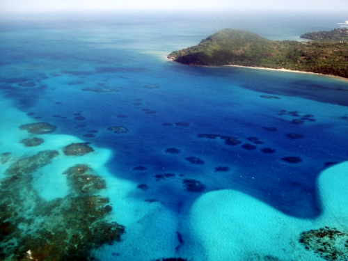 caribien marine life