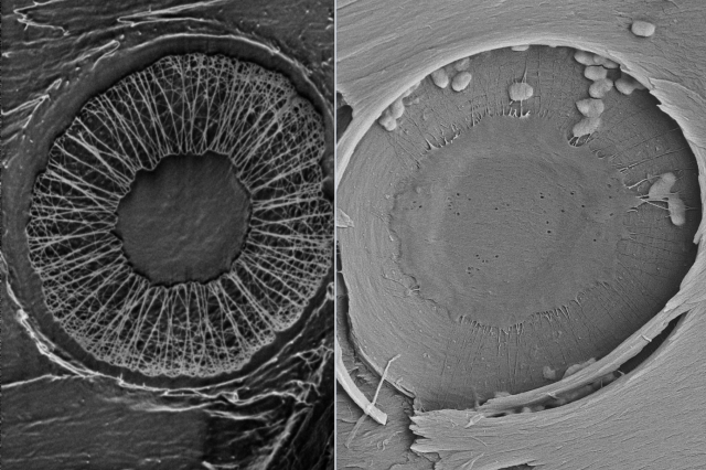 Membrane structures in plant xylem from different species are being investigated for use in water filtration.