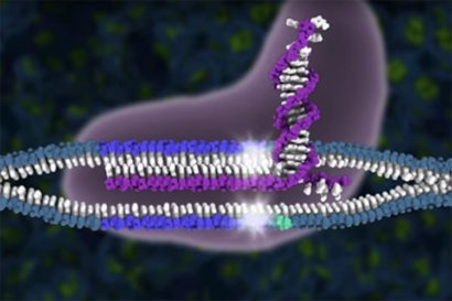 CRISPR-Cas9 cuts DNA