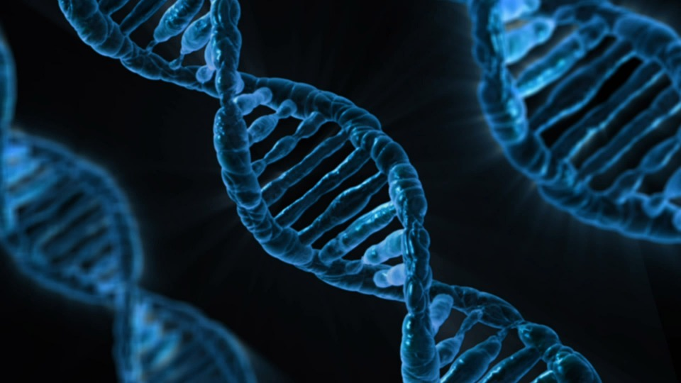 dna  - dna - Memory of a heart attack is stored in our genes