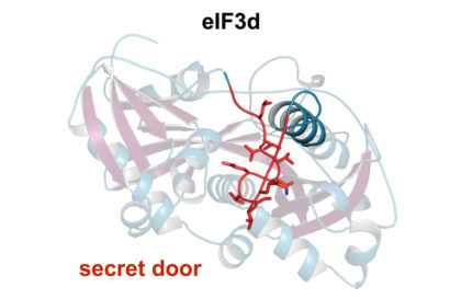 the secret door in the protein eIF3d
