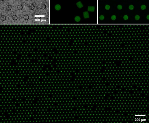 Improving microparticle arrays for engineering applications: A new technique using tiny microwells pushes the precision and scalability of microparticle arrays to a new extreme. The assembly includes empty porous microwell arrays (top left) and unassembled microparticles (top middle). A close view of the microparticles in arrays appears at top right, and a wide view of the assembly appears below.