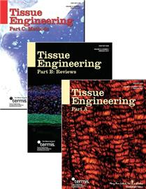 Tissue-engineered model developed to study bone-invading tumor