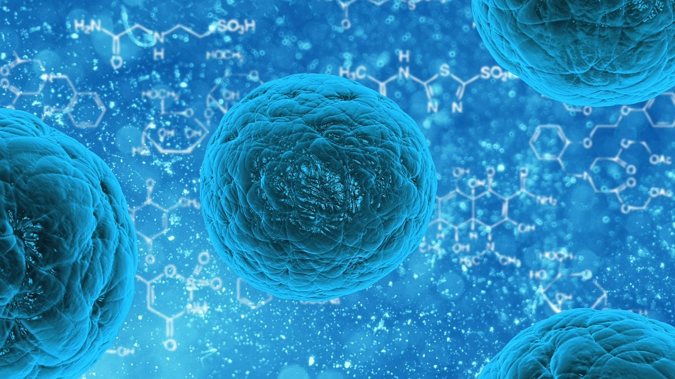 Study shows adipose stem cells may be the cell of choice for therapeutic applications
