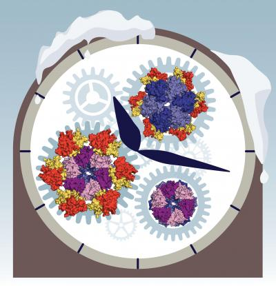 Operation of ancient biological clock uncovered