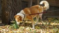 A Shelter Dog First Benefits An Innovative Leg Implant