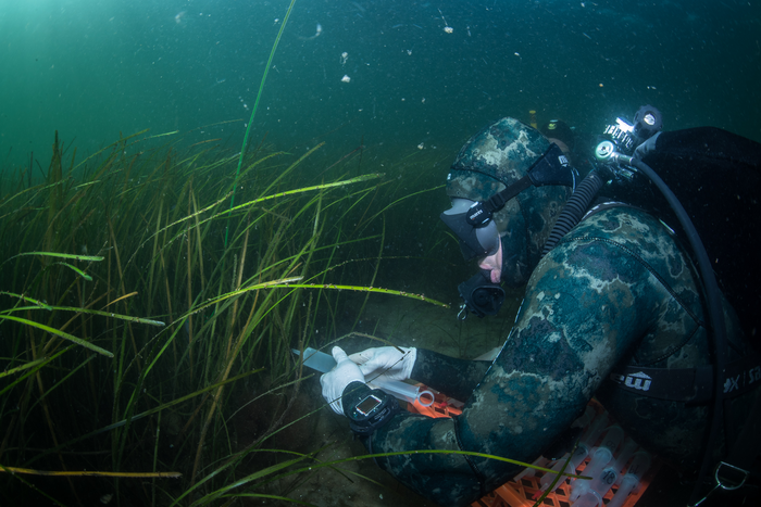 Divers take water samples in the seagrass meadow