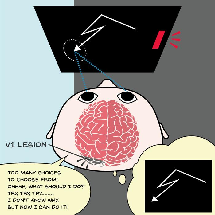 Visual instrumental learning in blindsight monkeys